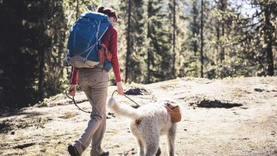 Photo of Things you need to know if you are going hiking with your dog;